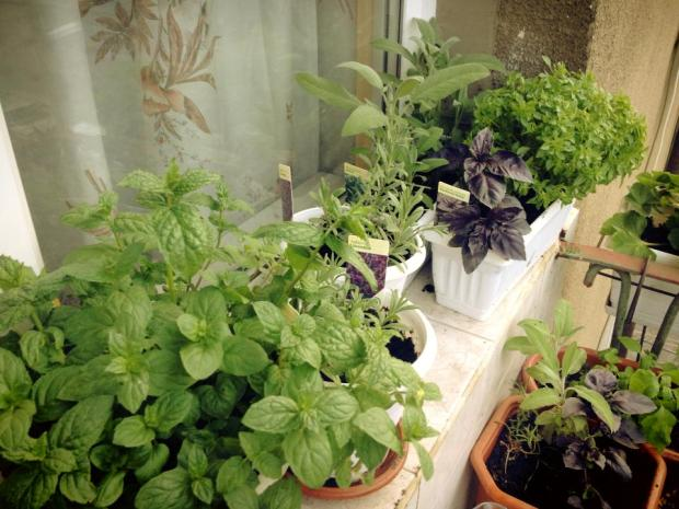 Our Wonderful Summer Balcony-Garden